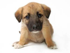 1C5045406-tdy-121204-puppy-names-02.blocks_desktop_large