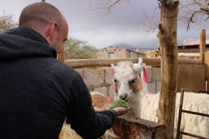 Feeding the Llamas